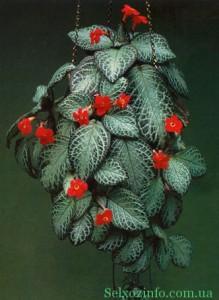 амперные растения для балкона