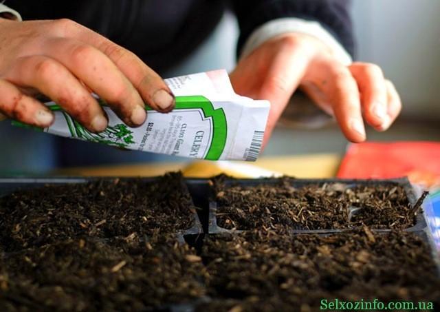 правила посева семян