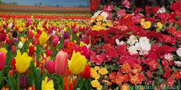 выращивание цветов в саду