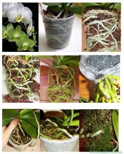 посадка орхидей в домашних условиях