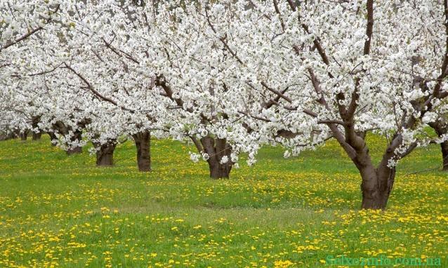 особенности минерального питания растений
