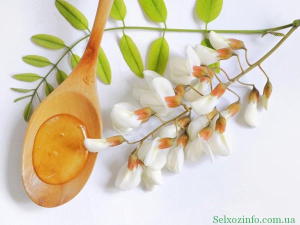 Полезные свойства акациевого меда