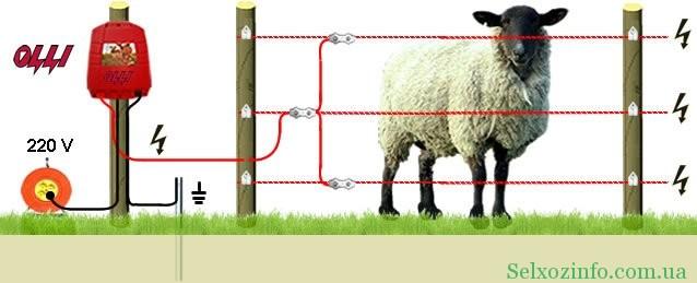 Электропастух для овец