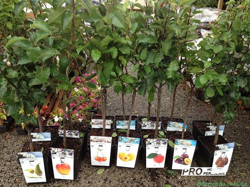 Бизнес-идея: выращивание саженцев на продажу