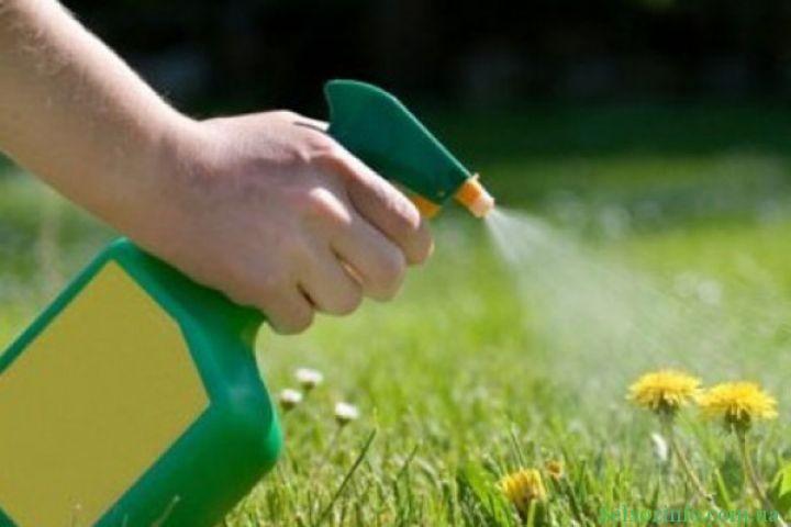 Стоит ли использовать гербициды
