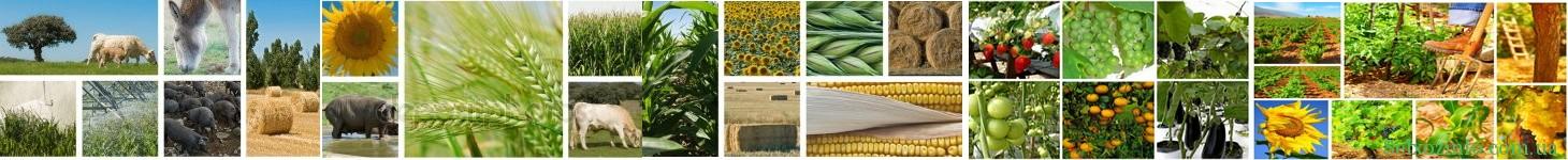 СельхозInfo