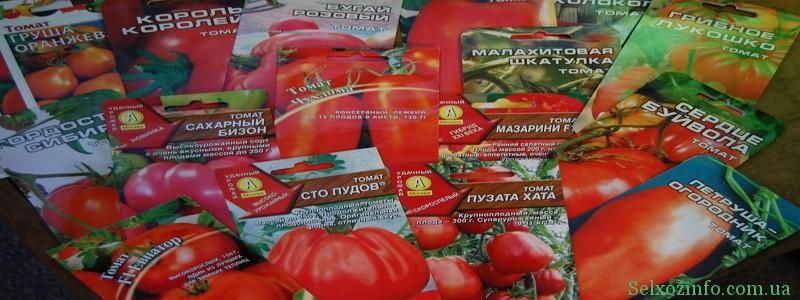 Лучшие сорта помидор для посадки в Украине