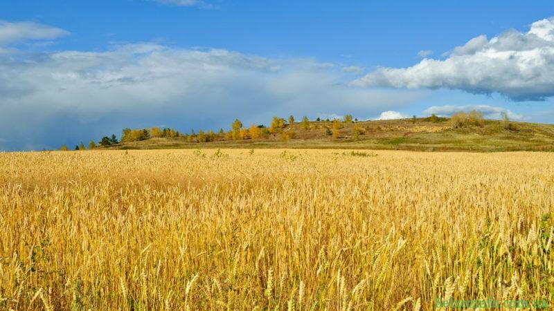 Обработка поля пестицидами и гербицидами