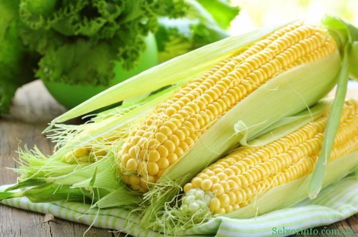 Насіння кукурудзи: як обрати і посадити