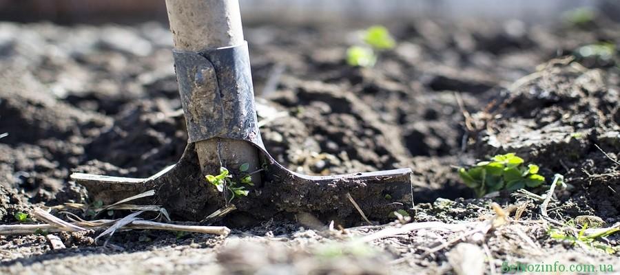 Копать огород осенью или не копать