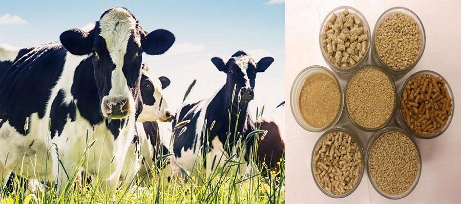 Зачем нужны витамины для крупного рогатого скота