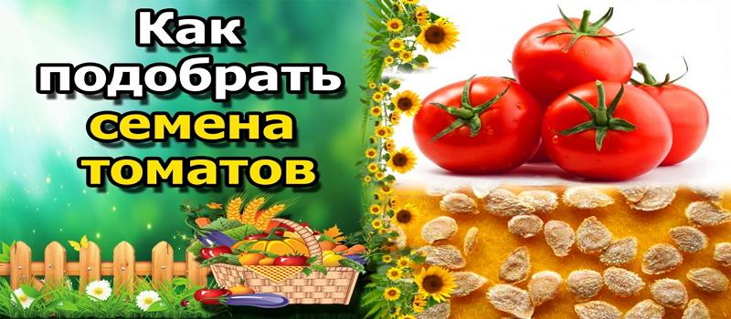 правильно выбрать семена томатов