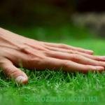 Как ухаживать за газонной травой на даче