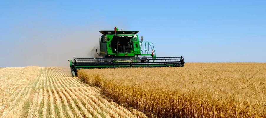 Znalezione obrazy dla zapytania Озимая пшеница: секреты богатого урожая
