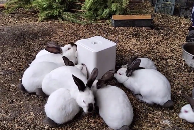 Нужно ли давать кроликам соль и каким способом
