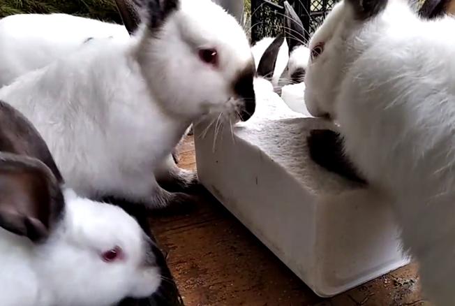 Сколько соли нужно кроликам